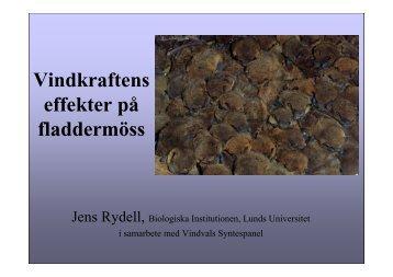 Vindkraftens effekter på fladdermöss (1 MB). Jens Rydell