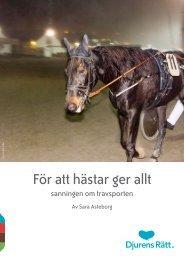 För att hästar ger allt - sanningen om travsporten - Djurens Rätt