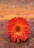 Bloemen in focus - paulvogt - Page 2