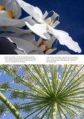 Bloemen in focus - paulvogt - Page 4
