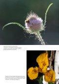Bloemen in focus - paulvogt - Page 6