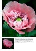 Bloemen in focus - paulvogt - Page 7
