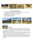 Når gnuer og zebraer føder på Serengeti - Søren Ervig - Page 2