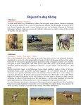Når gnuer og zebraer føder på Serengeti - Søren Ervig - Page 3