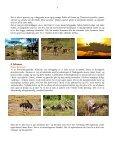 Når gnuer og zebraer føder på Serengeti - Søren Ervig - Page 4