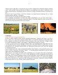 Når gnuer og zebraer føder på Serengeti - Søren Ervig - Page 6