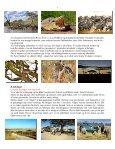 Når gnuer og zebraer føder på Serengeti - Søren Ervig - Page 7
