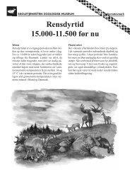 Rensdyrtid 15.000-11.500 før nu - Skoletjenesten
