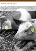 Godkendte CHR øremærker fra KRUUSE - Page 4