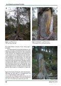 Den gamle furuskogen i Dieváidvuovdi/Dividalen – eit ... - NTNU - Page 4