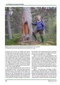 Den gamle furuskogen i Dieváidvuovdi/Dividalen – eit ... - NTNU - Page 6