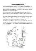 Hent folderen, Stranden - Ildfluer - Page 4