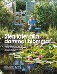 TRÄDGÅRD & BLOMMOR Näckrosor och dammar - Lassas Hagar - Page 2