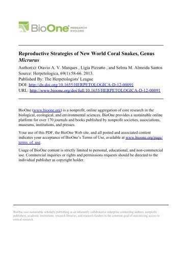 Reproductive Strategies of New World Coral Snakes, Genus Micrurus