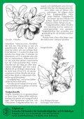 Ovanliga grönsaker - Page 4