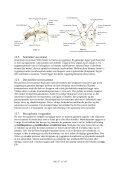 12. Nakkens anatomi - LFN - Page 5