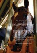 fyra dagars hästfest i huvudstaden! - Stockholm Equestrian Games - Page 4