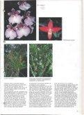 1994 - 4 - Orchideeën Vereniging Vlaanderen - Page 5