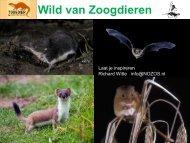 Wild van Zoogdieren - Stichting ANIMO
