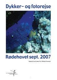 Rapport fra dykker- og fotorejse til Rødehavet i 2007 - Naturhistorisk ...