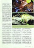 Planten in het terrarium (II) - Tuinbedrijf Erik Wevers - Page 3
