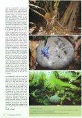 Planten in het terrarium (II) - Tuinbedrijf Erik Wevers - Page 4
