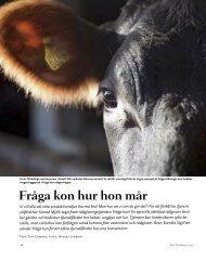 Fråga kon hur hon mår - Svenska Blå Stjärnan