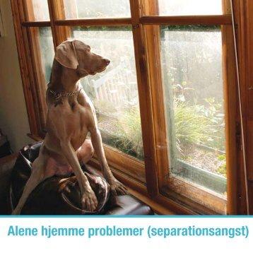 Alene hjemme problemer (separationsangst) - Dyredoktoren
