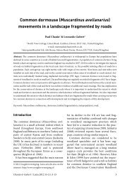 Common dormouse (Muscardinus avellanarius) - Paul Chanin ...