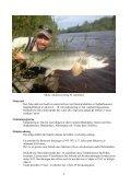 Årsskrift 2012 - Byskeälvens Fiskevårdsområde - Page 6