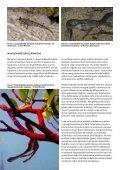 ilmaista matkalukemista: koralliriutan ekologiaa - Raya Divers - Page 6