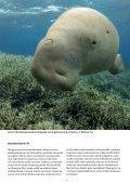 ilmaista matkalukemista: koralliriutan ekologiaa - Raya Divers - Page 7