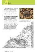 Pattedyr i byen - Danmarks Naturfredningsforening - Page 6