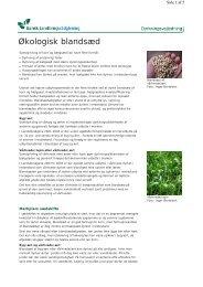 Økologisk blandsæd