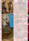 Tijger Reis India - Thika Travel - Page 5