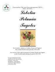 {Lobelia, petunia & tagetes - POM