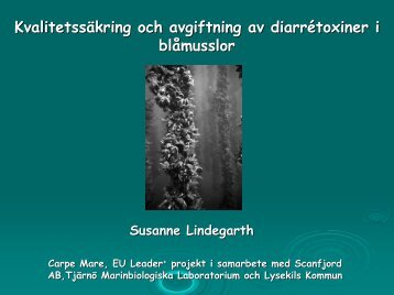 Kvalitetssäkring och avgiftning av diarrétoxiner i blåmusslor ...