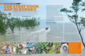 Ché staat voor aap in Borneo - OPZOEKNAARHETBEEST.be