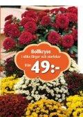 Köp ett fruktträd och få en säck plantjord - Page 5