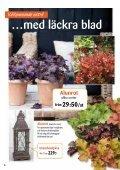 Köp ett fruktträd och få en säck plantjord - Page 6