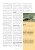 Aandacht voor kadavers in de natuur - Dood Doet Leven - Page 4