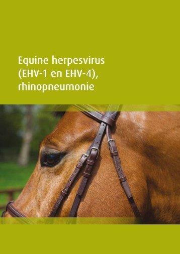 Equine herpesvirus (EHV-1 en EHV-4 ... - GD Horse care