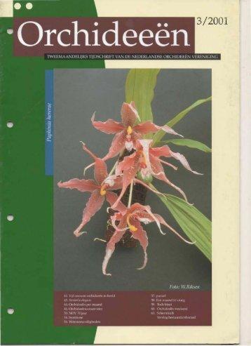 2001 - 3 - Orchideeën Vereniging Vlaanderen