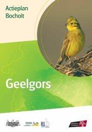 Bocholt - geelgors - Provincie Limburg