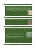 Tips voor een mooi gazon........ - Claessen BV Tuintoeleveringsbedrijf - Page 3