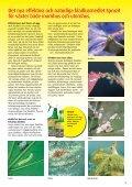 Naturenlig trädgårdsskötsel - Esbau - Page 3