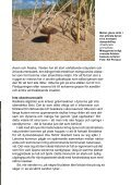 Ny syn på sandmarker - Page 4