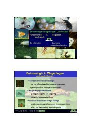 Presentatie Joop van Loon - DLV Plant