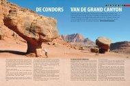 de condors van de grand canyon - OPZOEKNAARHETBEEST.be