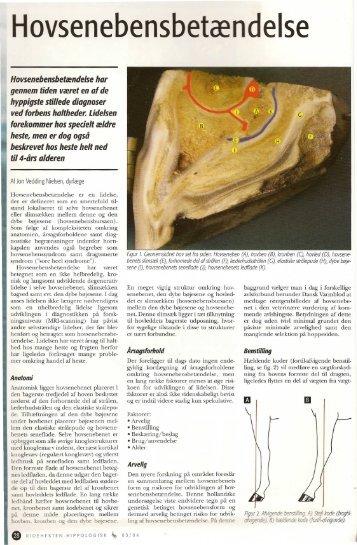 Dokumentation - Ansager Dyrehospital ApS